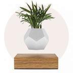 Pflanzen & Pflanzenpflege
