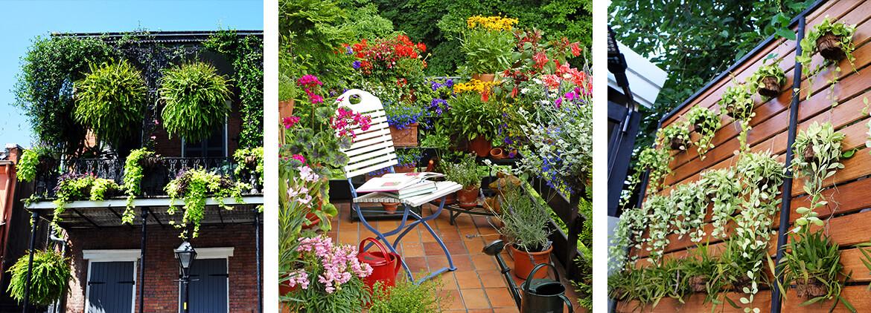 Balkonsichtschutz Mit Pflanzen
