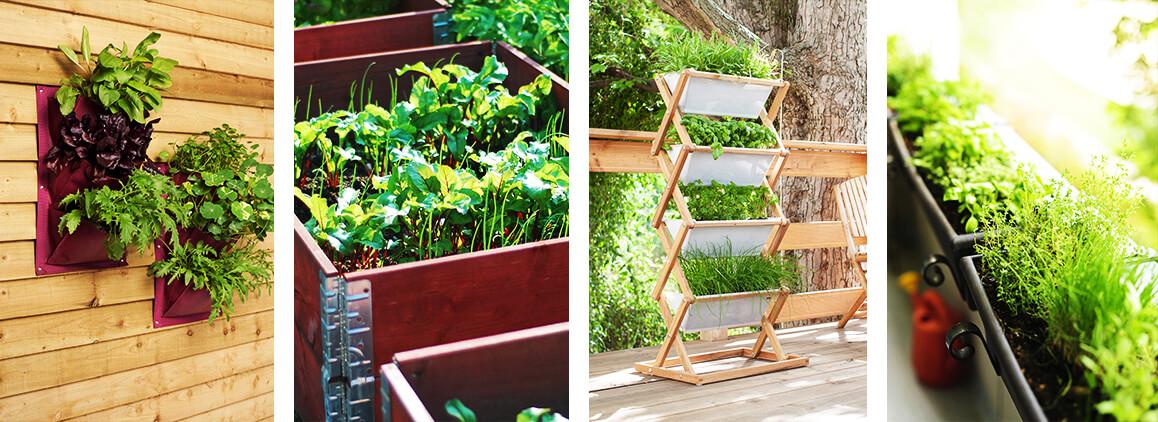 Gemüse Und Kräuter Auf Dem Balkon Anpflanzen