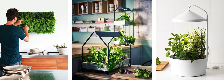 Küchen-Kräutergarten anlegen: Pflanz dich glücklich!