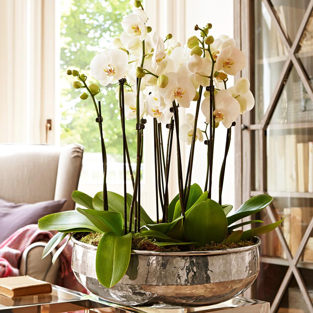 Pflanzen Power Mit Vasen Ampeln Co
